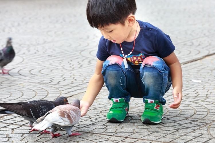 posso criar um pombo